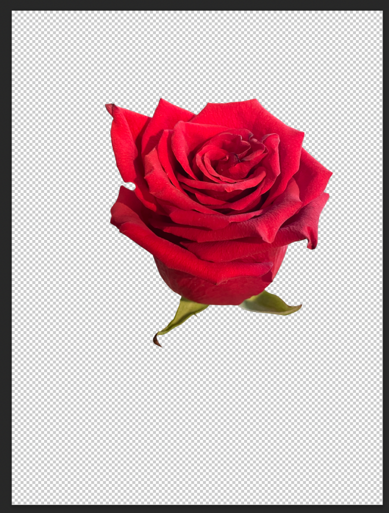 how to create an NFT leaves you with an isolated rose